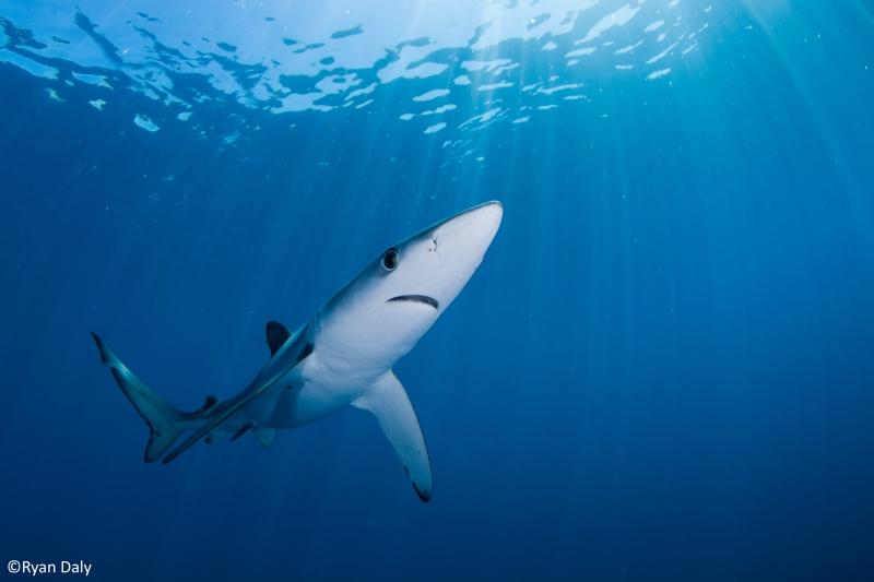 Industrialised fishing threatens shark hotspots