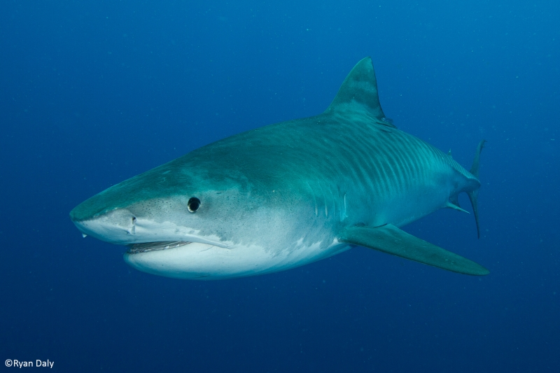 Industrialised fishing threatens shark hotspots