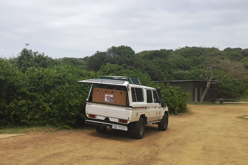 Stella was transported to Mission Rocks, iSimangaliso by SAAMBR.
