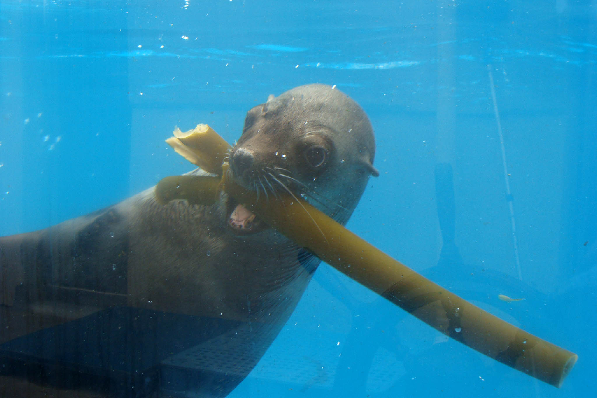 Seal kelp forest day seal day