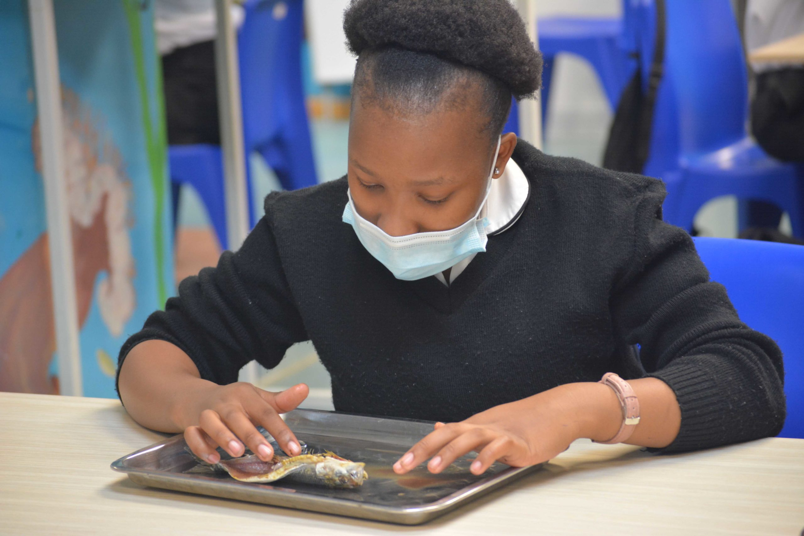 Christian High School learner dissecting sardine at uShaka Sea World