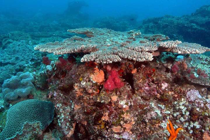 Long-term monitoring of local coral communities stimulates exciting new areas of research